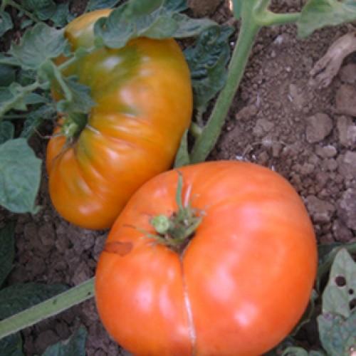 Tomato Seeds, Amana Orange Organic