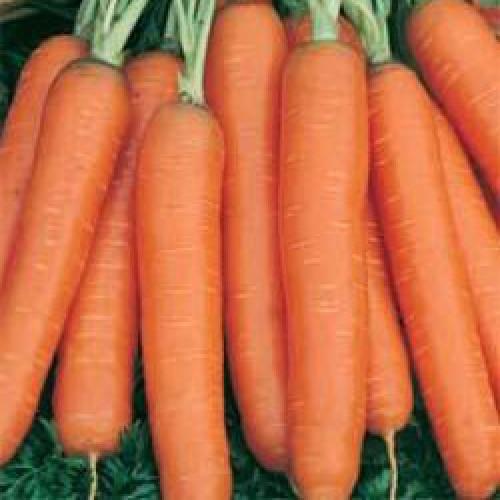 Carrot Seeds, Amsterdam 2