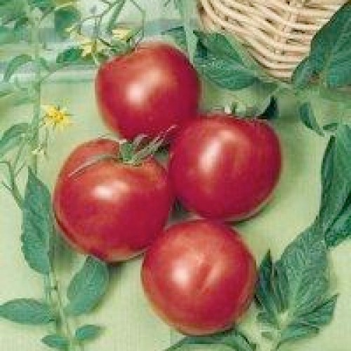 Tomato Seeds, Arkansas Traveler