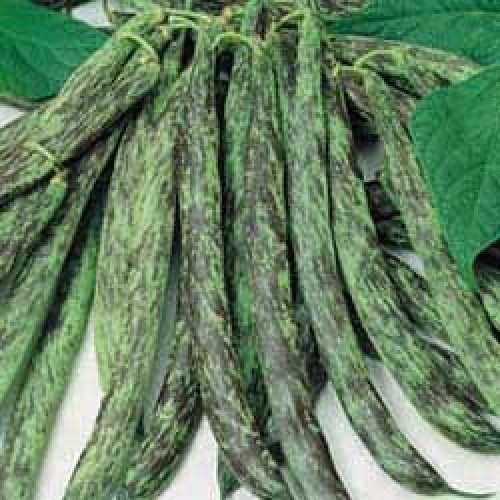 Bush Bean Seeds, Bobis d'Albenga