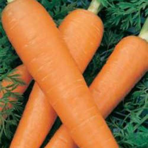 Carrot Seeds, Berlicum 2