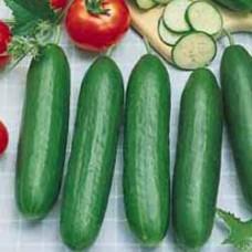 Cucumber Seeds, Beth Alpha