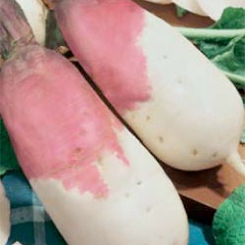 Turnip Seeds, Bianca Colleto Viola