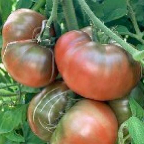 Tomato Seeds, Black Krim ORGANIC