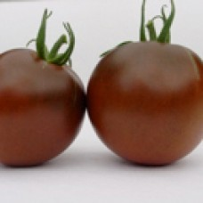 Tomato Seeds, Black Prince ORGANIC