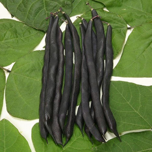 Pole Bean Seeds, Blauhilde