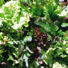 Salad Seeds, Bon Jardin Mix
