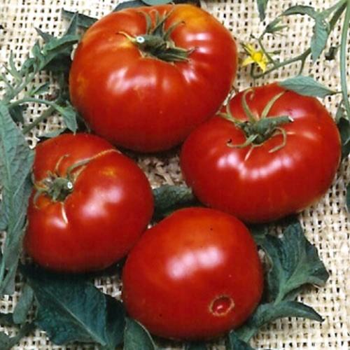 Tomato Seeds, Brandywine Red ORGANIC