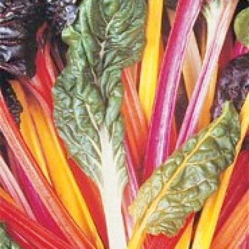 Swiss Chard Seeds, Deluxe Rainbow Mix ORGANIC