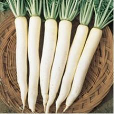 Radish Seeds, China White