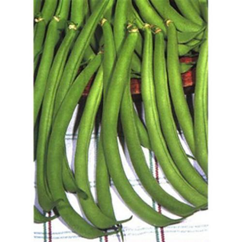 Bush Bean Seeds, Contender