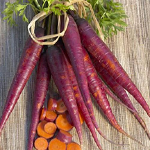 Carrot Seeds, Purple Dragon Organic