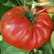 Tomato Seeds, Country Taste F1 Hybrid