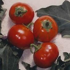 Eggplant Seeds, Turkish Orange