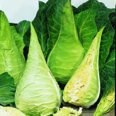 Cabbage Seeds, Filderkraut Hillmar