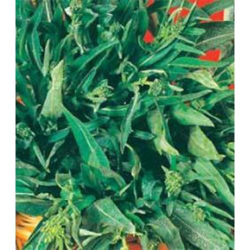 Rapini - Broccoli Raab Seeds, A Foglia D' Olivo