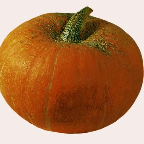 Pumpkin Seeds, Gele Reuzen