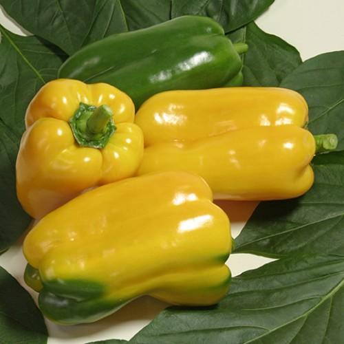 Pepper Seeds, Gemini F1 Hybrid