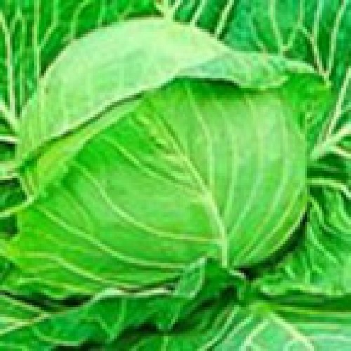 Cabbage Seeds, Golden Acre