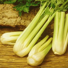 Celery Seeds, Peppermint Stick