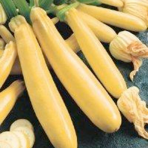 Zucchini Seeds, Golden