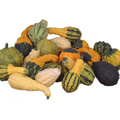 Gourd Seeds, Weird Warted Pro Mix