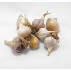 Garlic Starters Grab Bag