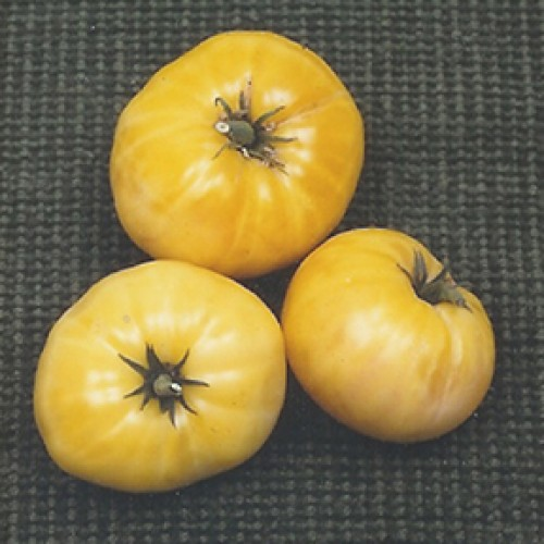 Tomato Seeds, Great White Organic