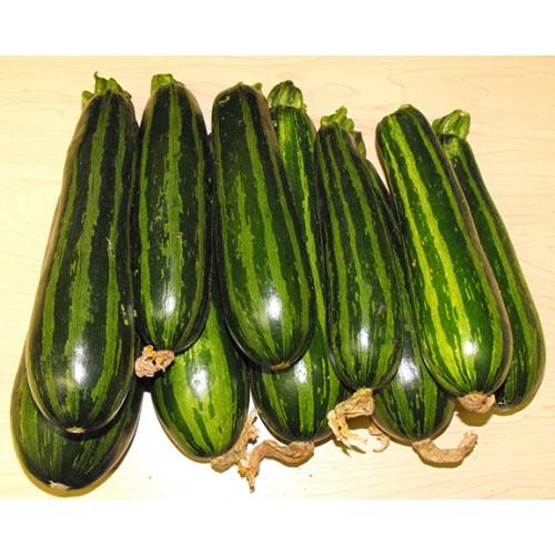 Zucchini Seeds, Green Tiger F1 Hybrid