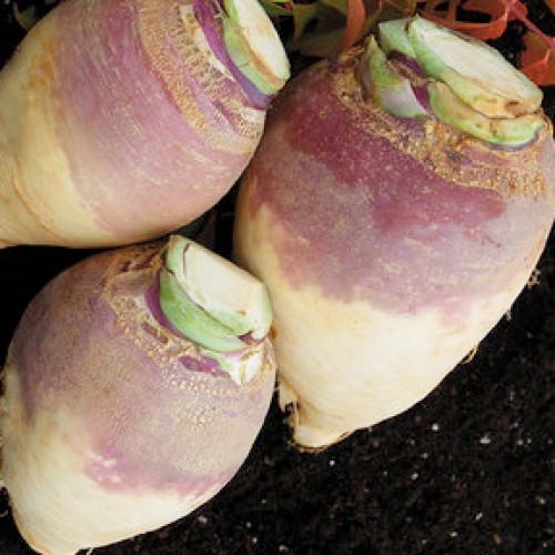 Rutabaga Seeds, Helenor ORGANIC