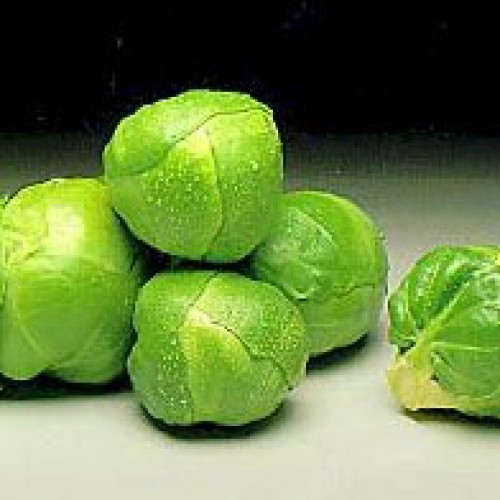 Brussels Sprouts Seeds, Hilds Ideal