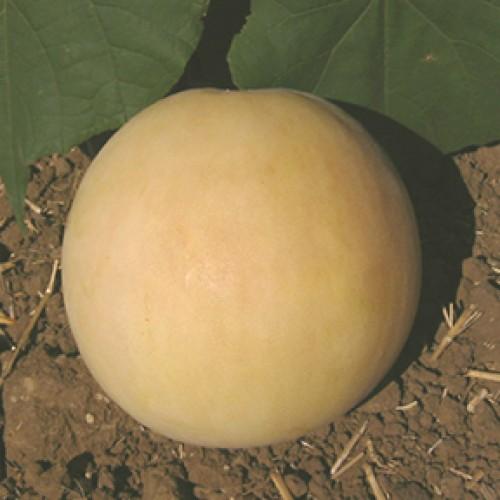 Melon Seeds, Orange Flesh Honey Dew ORGANIC