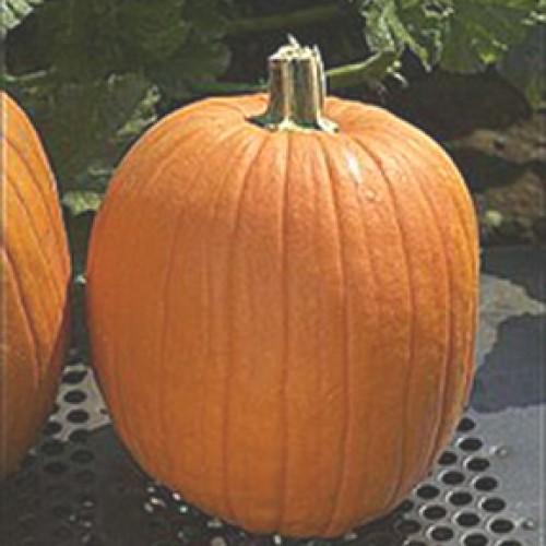 Pumpkin Seeds, Howden