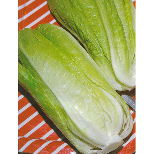 Romaine Lettuce Seeds, Idra