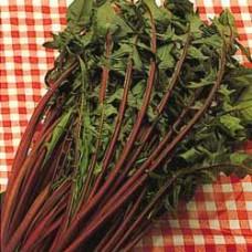 Chicory Seeds, Catalogna Italiko Rosso