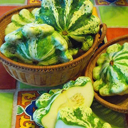 Squash Seeds, Juane et Vert Scalloped