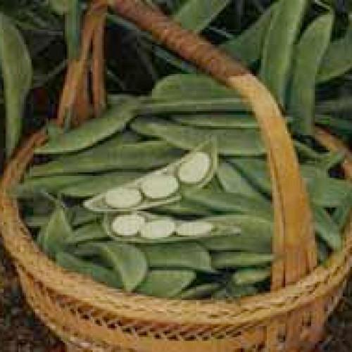 Lima Bean Seeds, King Of Garden
