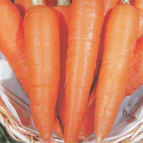 Carrot Seeds, Kuroda