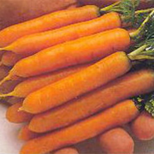 Carrot Seeds, Little Finger