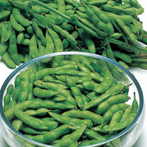 Edamame Soybean Seeds, Lucky Lion