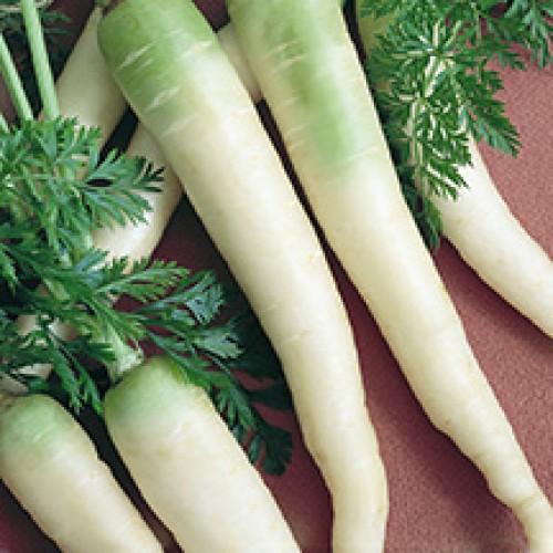 Carrot Seeds, Lunar White