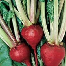 Beet Seeds, Lutz Green Leaf Red Stem