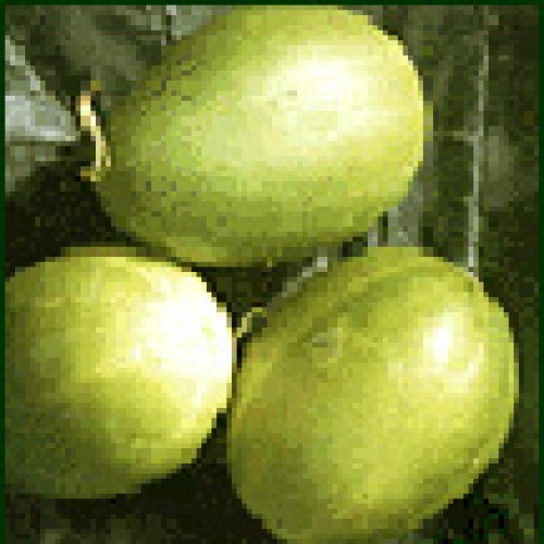 Cucumber Seeds, Mandurian Round