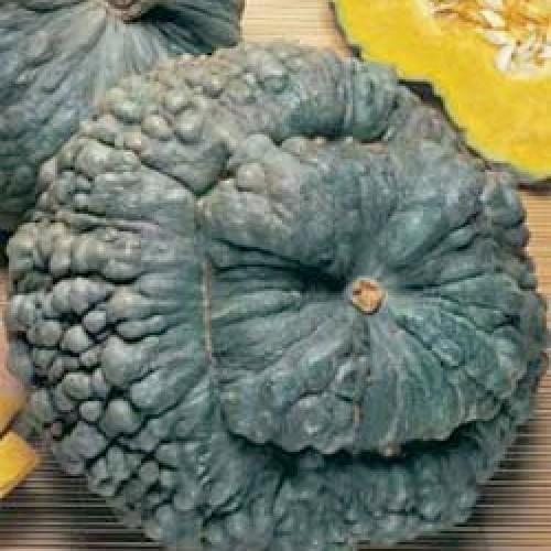 Pumpkin Seeds, Marina Di Chioggia