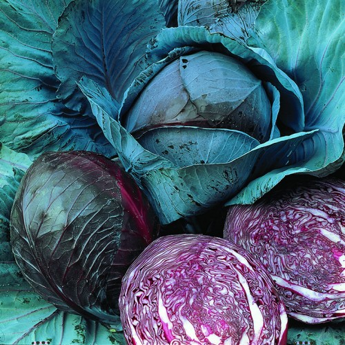 Cabbage Seeds, Marner Lagerrot ORGANIC