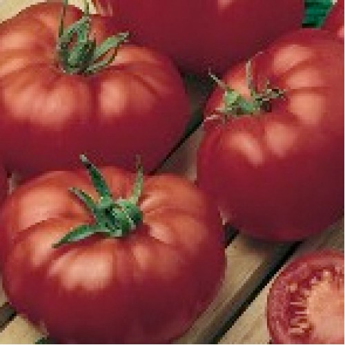Tomato Seeds, Master F1 Hybrid
