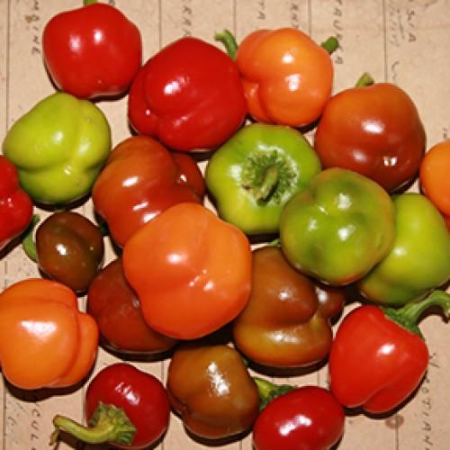 Pepper Seeds, Mini Bells Mix