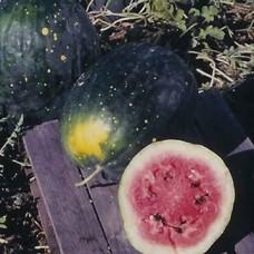 Watermelon Seeds, Moon & Stars Yellow Flesh