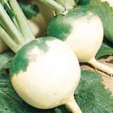 Turnip Seeds, Norfolk Green