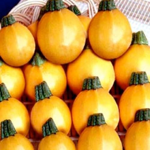 Zucchini Seeds, One Ball F1 Hybrid